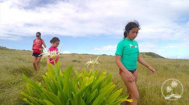 Hiking on Pinel Island, passing a flowering Crinum