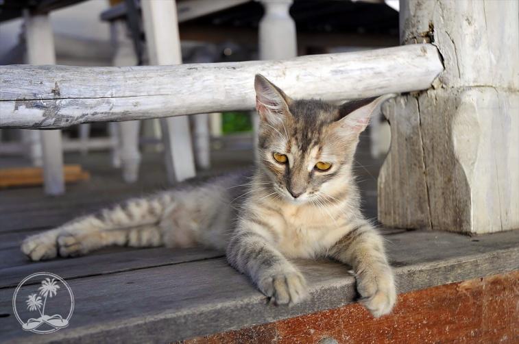 Lucia the Cat