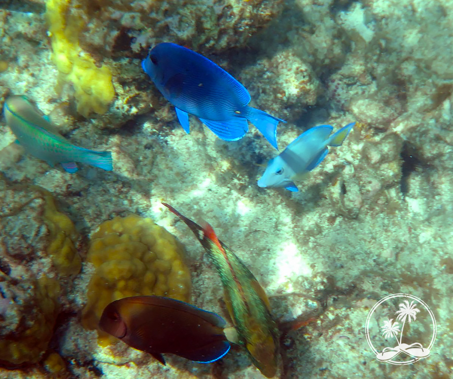 Along the underwater snorkel trail